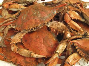 Cantler's Riverside Inn Steamed Crabs